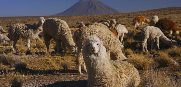 La dureza del altiplano permite una economía muy especial, ecológica y con identidad propia, que está en peligro por la producción masiva y la introducción de especies intrusivas en países […]