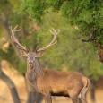 """Photo-Raptors es una nueva iniciativa comercial que viene a enriquecer el floreciente negocio en España de lo que debería empezar a bautizarse como """"turismo de fotografía de naturaleza"""" ©José Gordillo […]"""