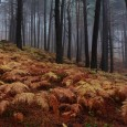 Country Sessions organiza su primer taller fotográfico de 6 horas dedicado a la fotografía de paisaje y otoño en la sierra madrileña. ©Andrés López / countrysessions.org Fecha: DOMINGO 10 DE […]