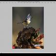 Una forma rápida y sencilla de acentuar los colores de una imagen en Photoshop. En primer lugar abrimos la imagen. A continuación duplicamos la capa de fondo con ctrl+J (WIN) […]
