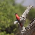Este lunes viajamos a África para ver una especie de abejaruco de colores muy diferente a los abejarucos que visitan la zona europea. Cuando llega la temporada cálida en Europa […]
