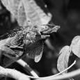 Hoy como cada lunes, os presentamos las fotografías escogidas por nuestros fotógrafos de Country Sessions, de sus archivos personales. En este caso, La fotografía de Tomás Calle de una iguana […]