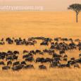 Iniciamos una sección sobre Kenia/Tanzania, y la hemos querido inaugurar con un viaje en globo para poder comprobar la inmensidad del territorio y la dificultad de los documentales sobre el […]