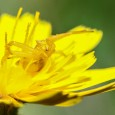 Este lunes de primavera en el que se nota la llegada del buen tiempo ylos campos se llenan de colores y de sonidos nuevos, os mostramos una foto de nuestro […]