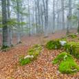 Aunque parece que se retrasa, ya tenemos el otoño pisándonos los talones, fotográficamente hablando. Uno de los mejores lugares para fotografiarlo donde se tomó esta imagen, el Parque Natural de […]