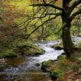 Cuando llega el otoño todos los hayedos son muy cotizados por los amantes de la naturaleza, pero ninguno se puede comparar al de Muniellos Lo que le hace singular a […]