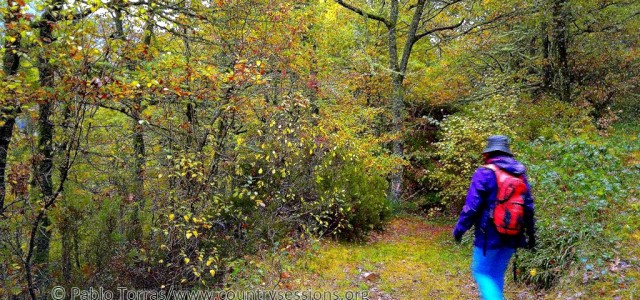 Retomamos la tradición literaria del blog para relatar un Cuento ilustrado con las imágenes del Valle del Degaña. Érase un viajero que aprovechó los días del otoño para apreciar el […]
