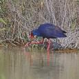 """Decidí hacer una visita al Parque Natural """"El Hondo"""" es una zona pantanosa donde la Compañía de Riegos de Levante construyó en los años veinte del pasado siglo dos […]"""