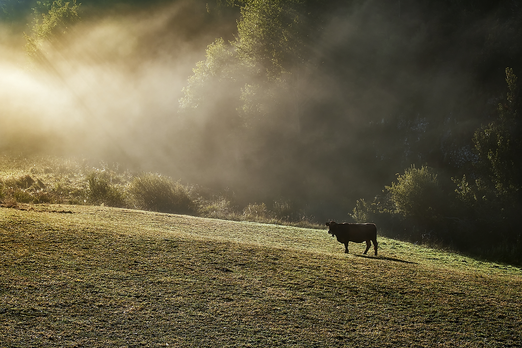 Amanecer en los montes palentinos